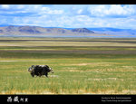 Tibet_28