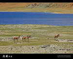 IMG_0325a
