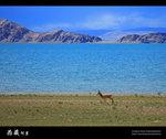 Tibet_57