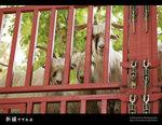 Xinjiang_26