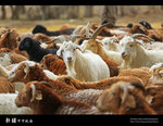 Xinjiang_28