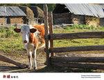 Xinjiang_39