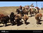Xinjiang_44