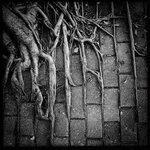疫症下要如樹根懂變形才可生存