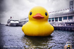 Rubber duck last day in Star Ferry Hong Kong