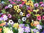荷蘭花卉世界_10